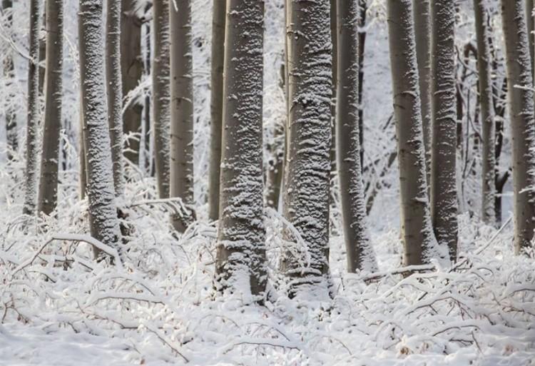 Ilyen szépséges a tél a Bükkben!