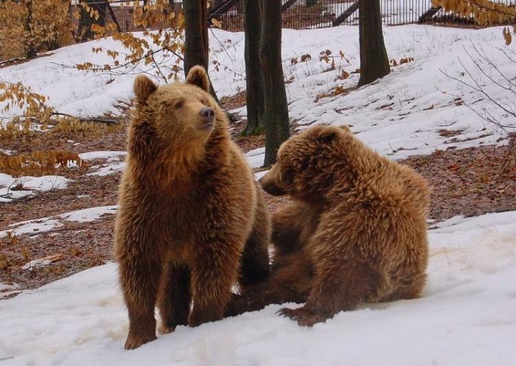 Előbújnak a miskolci medvék?
