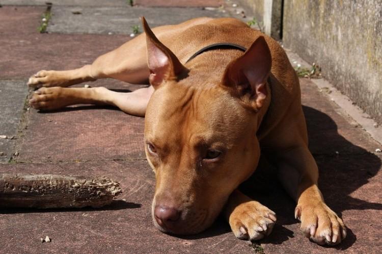 Kutyái után az ormosbányai gazda lehet rövid pórázon