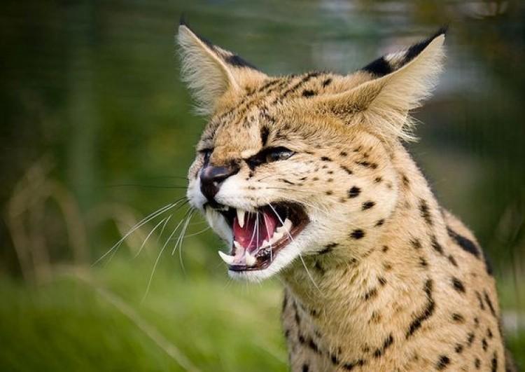 Társasházi udvaron tartott veszélyes macskát