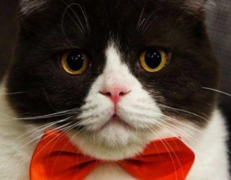 Debreceni éttermesek, rettegjetek! Itt a Gasztro Cats