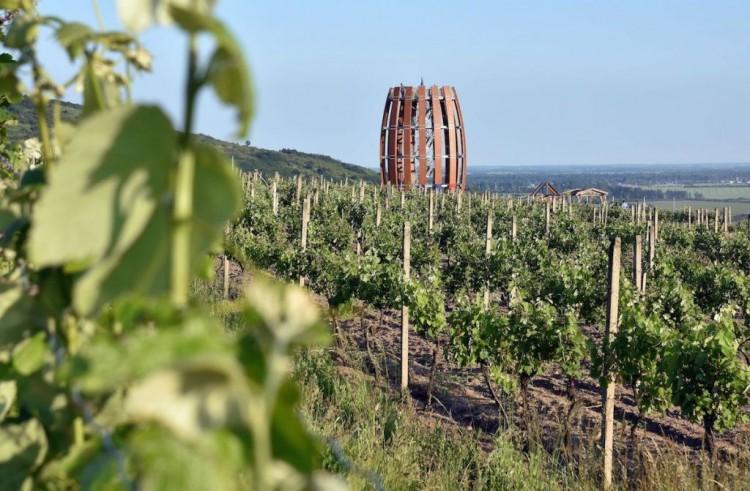 A szlovákiai Tokaj-borvidék az egyik legkiválóbb a világon