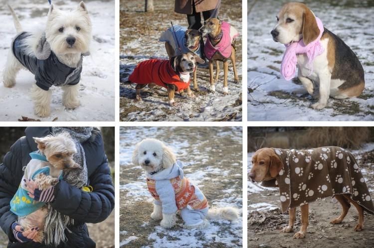 Téliesített kutyák