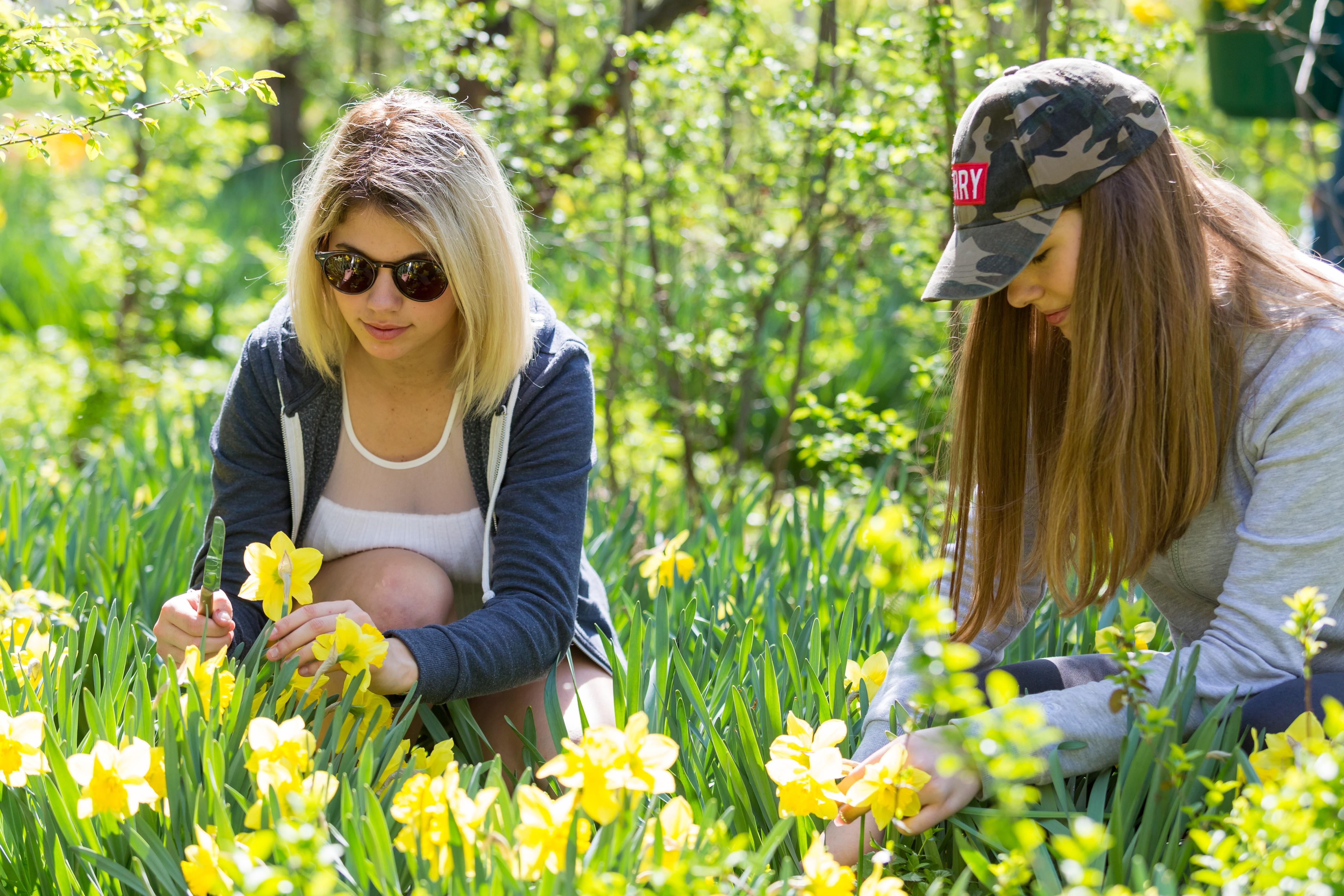 Több ezer virágot osztanak szét Debrecenben