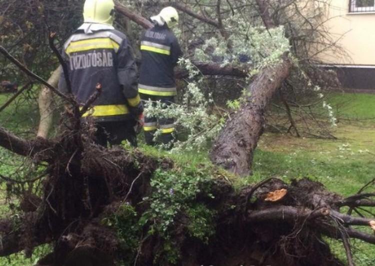 17 méteres fa borult az udvarra Debrecenben