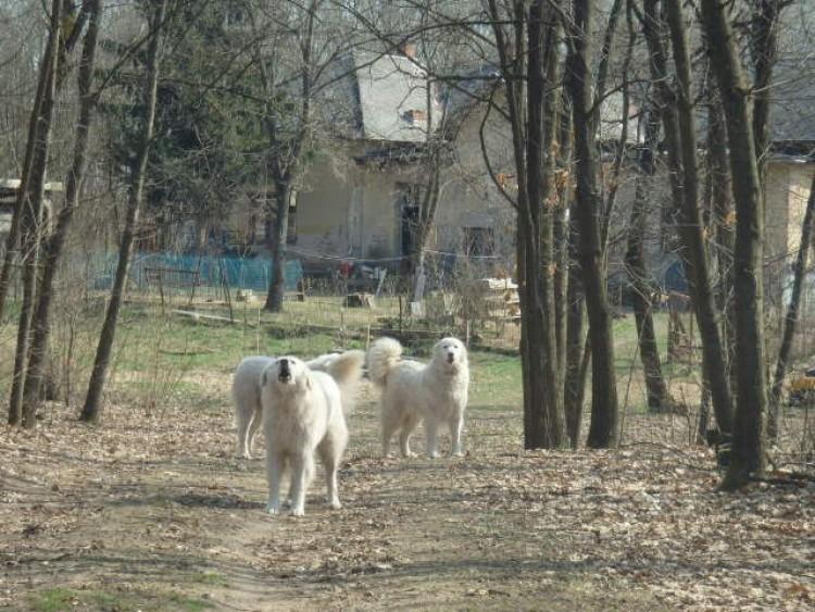 Nem kell már tartania a Debrecen környéki túrázóknak a kóbor ebektől