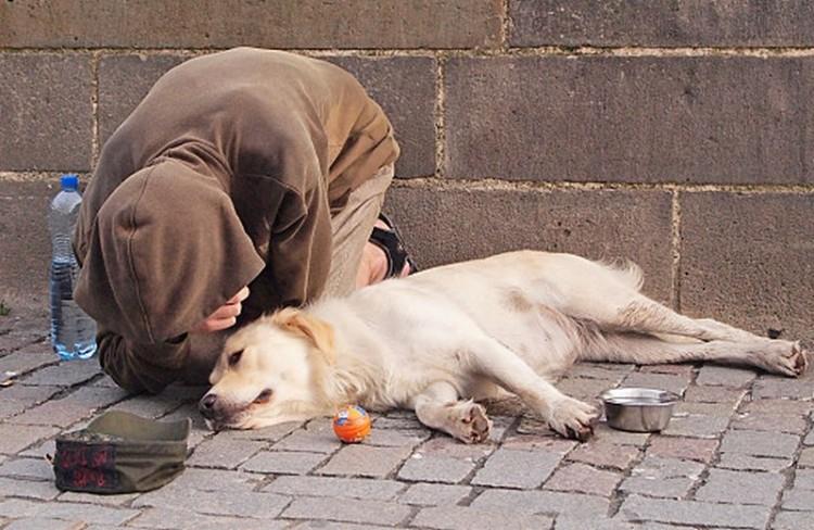 Aggódnak a debreceni koldus kutyájáért