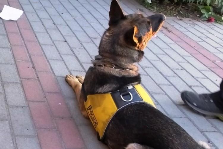 Rendőrkutya bravúrja Komádiban