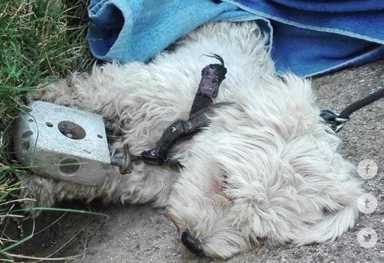 Kegyetlen állatkínzás Balmazújvárosnál