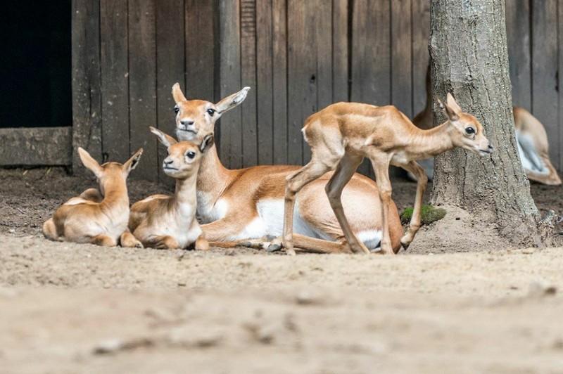Hat kecses csoda született egy hét alatt Nyíregyházán