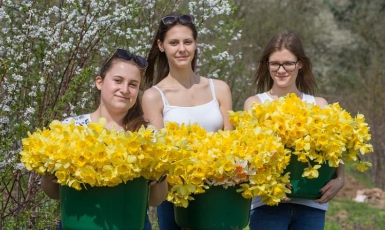 Debreceni diákok szedték a remény virágát