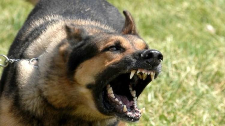 Ítélet: súlyos testi sértésért felel a harapós kutya gazdája