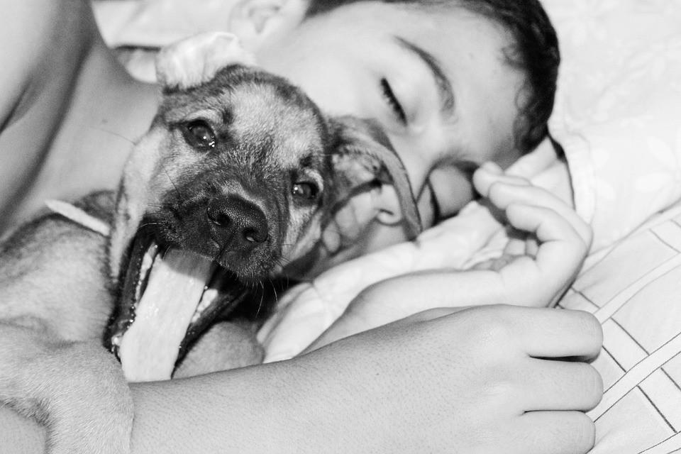 Hogyan legyünk felelős állattartók? Segédanyag készül