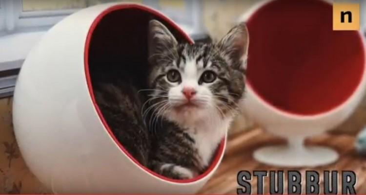 Ezt a négy cuki cicát lesik most az internetezők