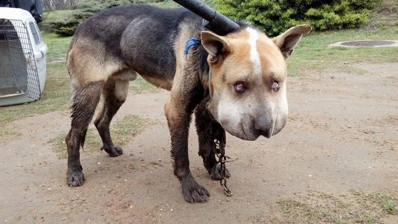 Elborzasztó állatkínzás Szabolcsban
