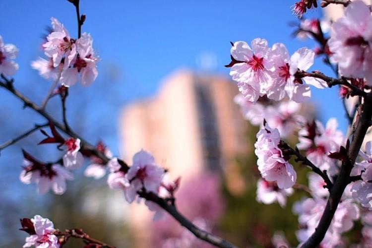 Hahó, tavasz!