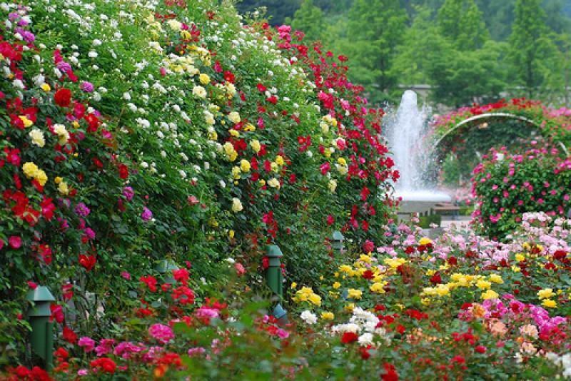 Szülinapot ünnepelnek a botanikus kertben