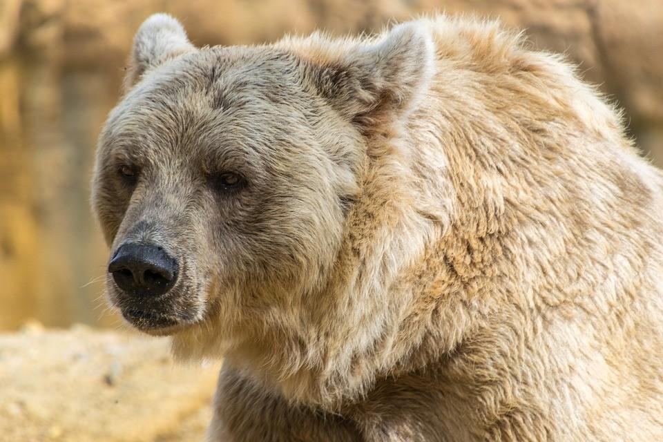 Hajmeresztő! Kirámolta a medve a hűtőt