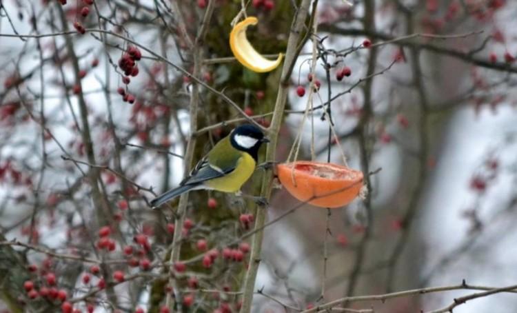 A madarak is karácsonyoznak Nyíregyházán