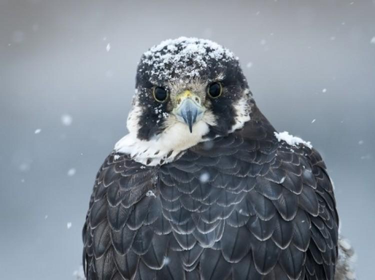 Ez a gyönyörű szárnyas az év madara