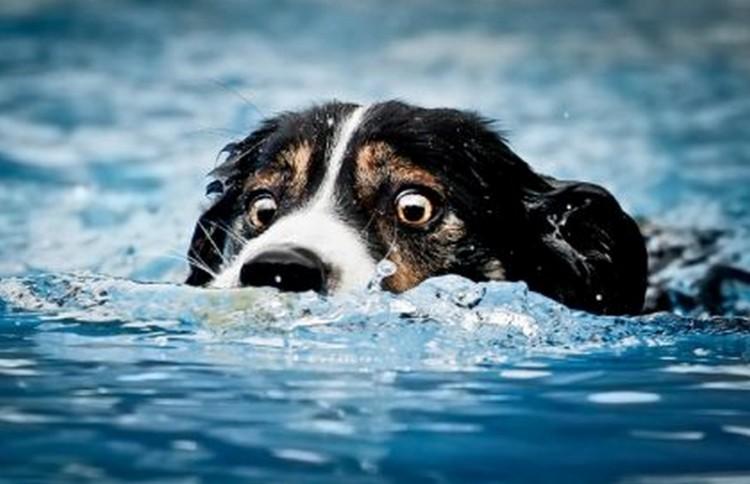 Tilos a nyíregyházi vizekbe állatot vinni