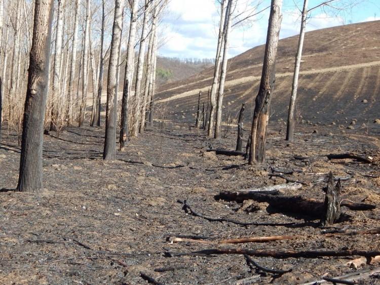 Háromszázezernél több csemete odaveszett az ózdi tűzben