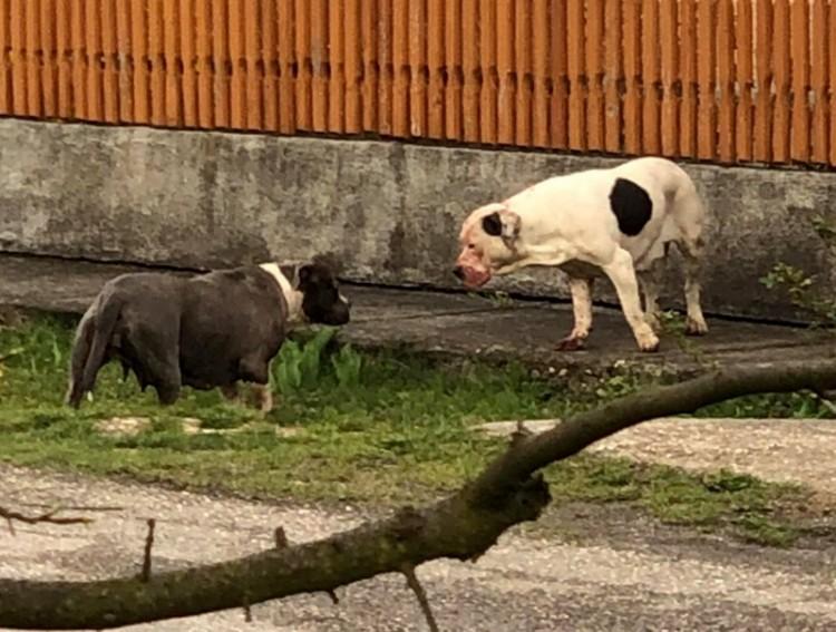 Véres kutyatámadás Sajószentpéteren, patthelyzettel