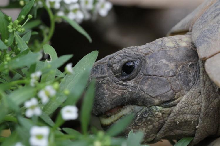 Ózdi rendőrök segítségével megtalálták a teknős agyonverőjét