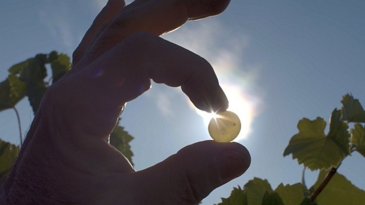 A Folyékony aranyat a miskolciak láthatják először