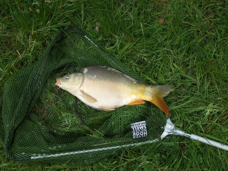 Több mint 400 kiló halat fogtak Ózdon