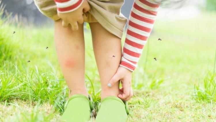 A kérészek miatt nem irtják a szúnyogokat Tiszaújvárosban