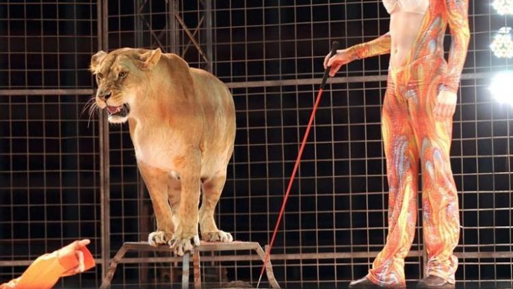 Pánik: elszabadult az oroszlán a cirkuszi előadáson