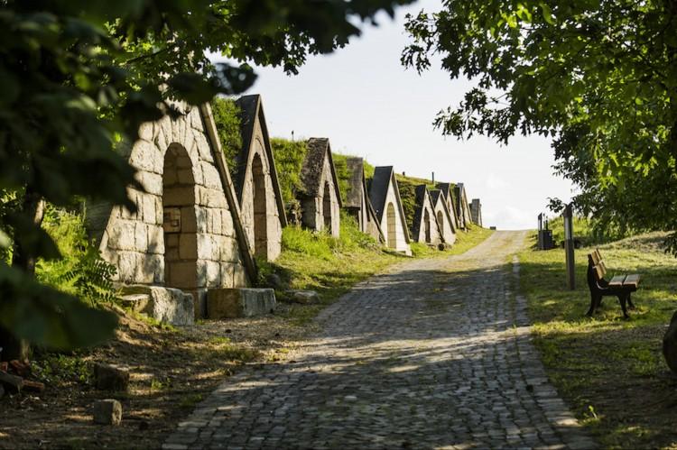 Már terveztetnék a Tokaj környéki kerékpárutakat
