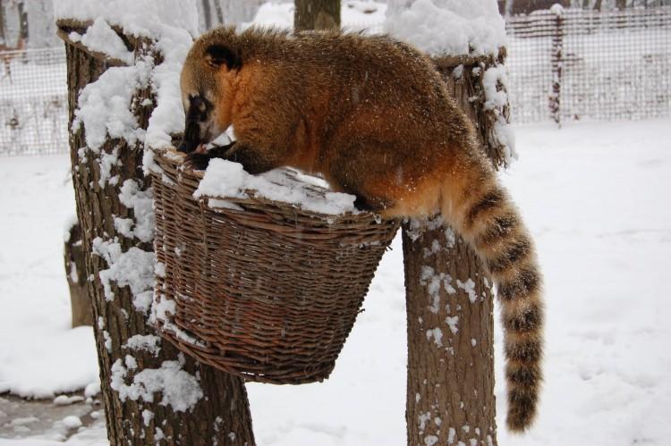 Miskolcon is megünneplik az állatok karácsonyát
