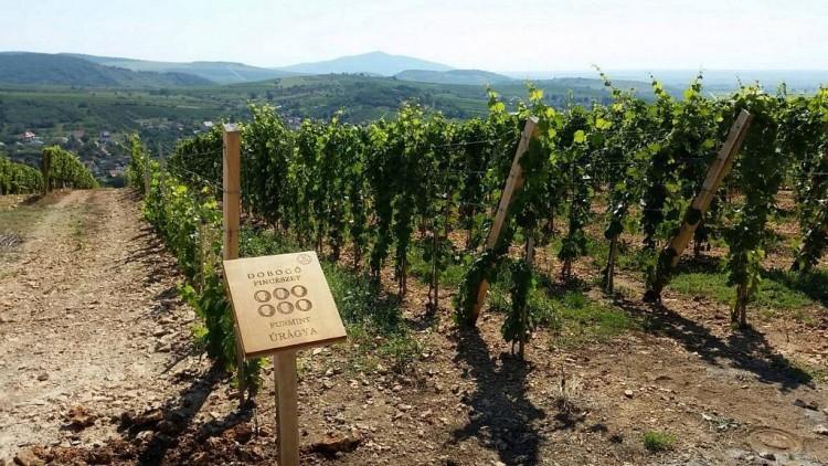 Tokaji szőlőbirtok a legszebbek között