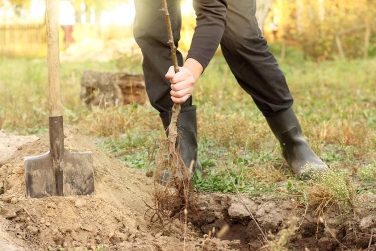 2020 végéig kétezer fát ültetnek Miskolcon