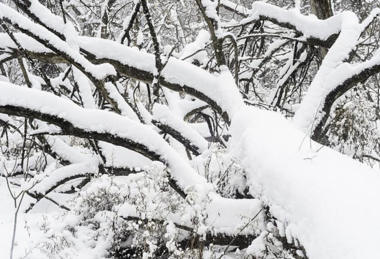 Dőlnek a fák a hó súlya alatt szerte Borsodban