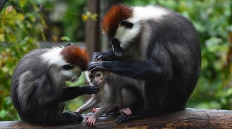 A járvány ellenére is rengetegen látogattak el a Miskolci Állatkertbe 2020-ban