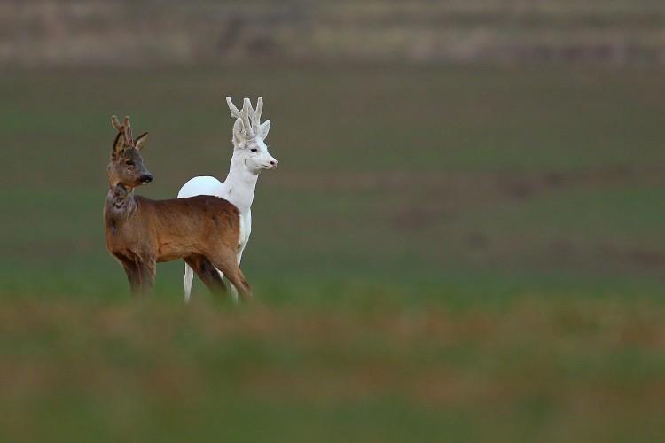 Egészen ritkán látható állatra figyelt fel egy fotós Tokajnál
