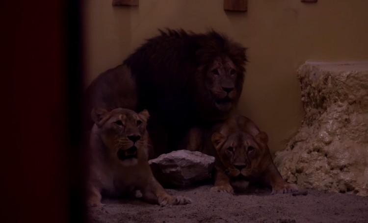 Nem mindennapi ragadozók érkeztek a Miskolci Állatkertbe