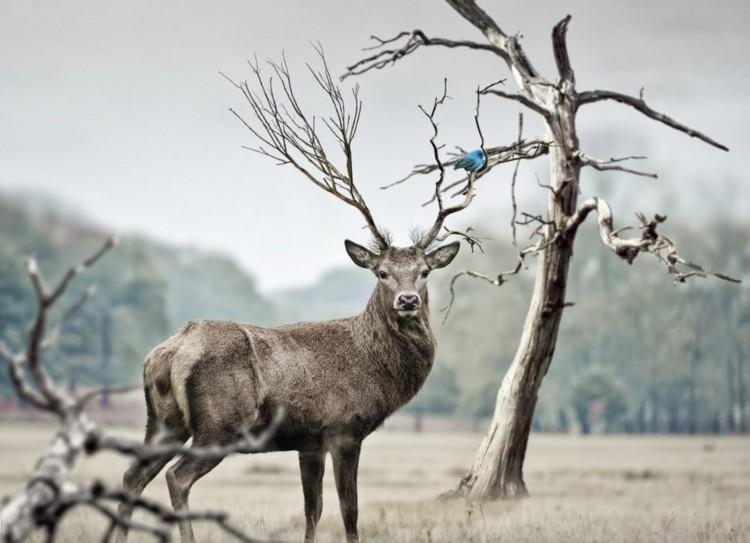 Nyit a vadászati világkiállítás
