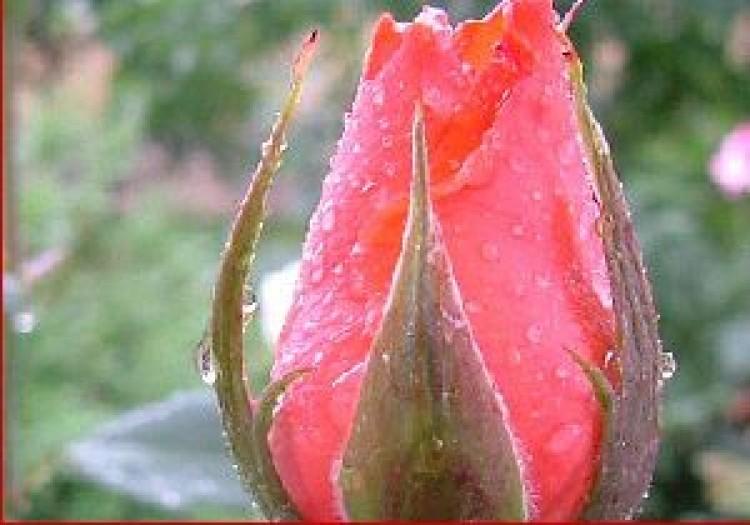 Tavaszt hoz a december Hajdú-Biharba
