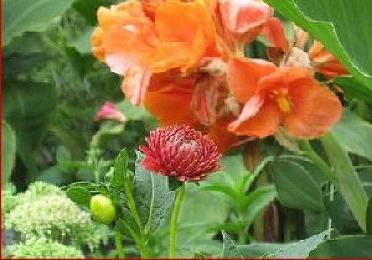 A Botanikus kert újra virágzik
