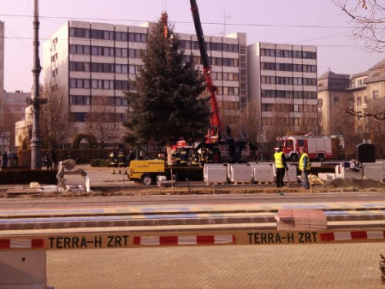 Gépesített jézuskák hozták a fenyőt Debrecenbe