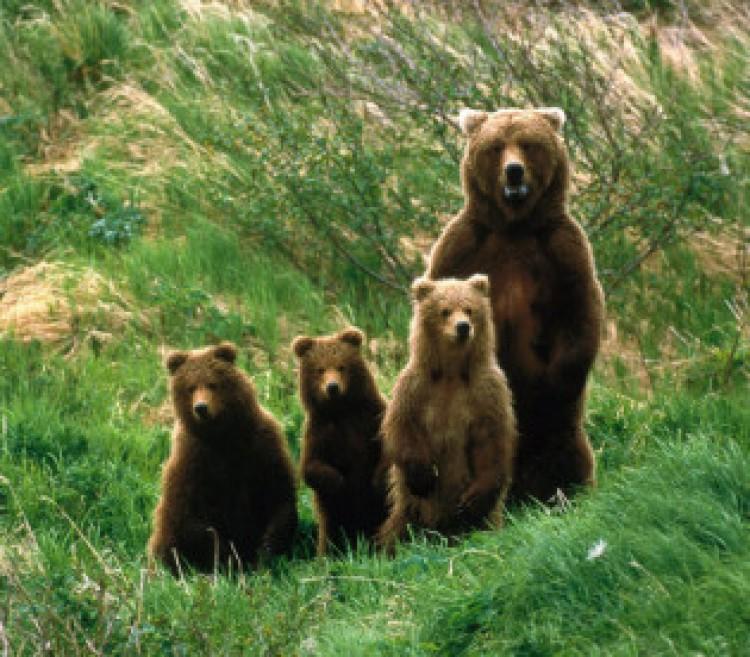 A székelyek tudják: a medve nem játék