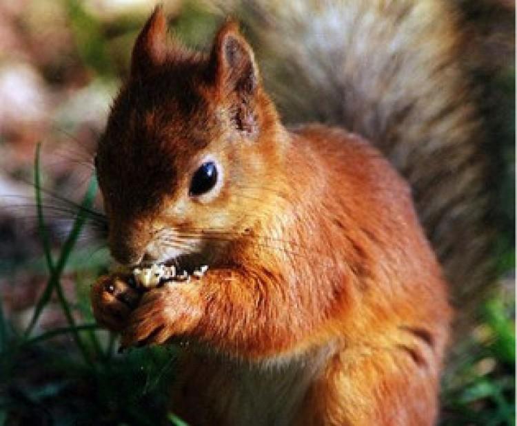 Egyetemista mókusok Debrecenben!
