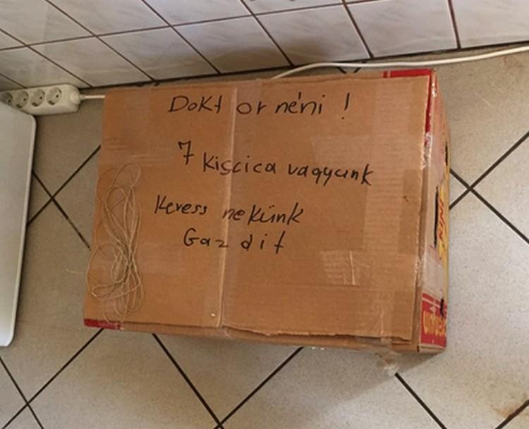 Hét macskatestvért hagytak sorsára egy dobozban