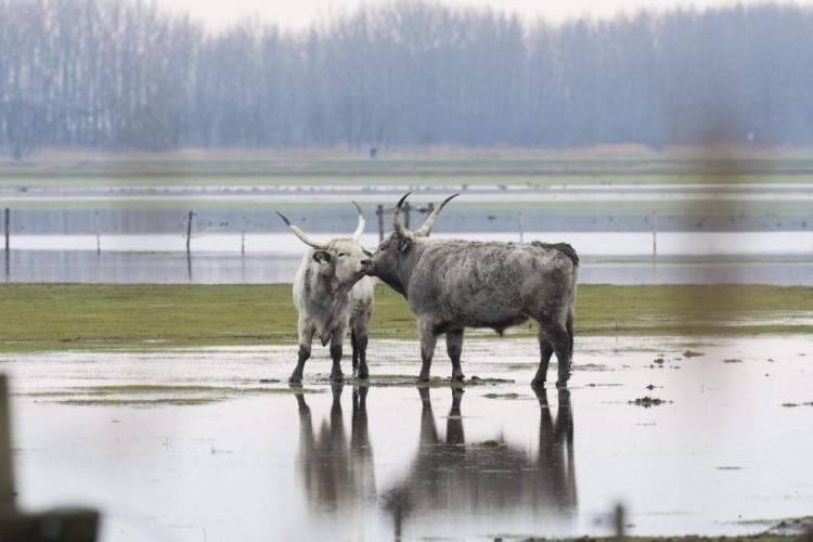 Őrület, mekkora a belvíz Hajdú-Biharban!