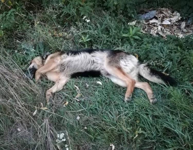 Újabb gyönyörű kutyát gyászolnak az állatvédők