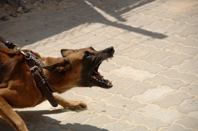 Két esetben is emberre támadtak a kutyák